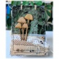 Mushrooms - Fungi MDF Wood Shape - Style 9