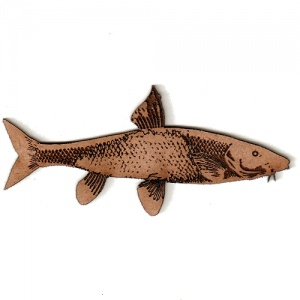 Barbel MDF Fish Wood Shape