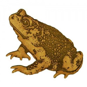 Common Toad - MDF Wood Shape Style 3