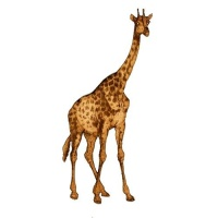 Giraffe - MDF Wood Shape