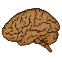 Anatomical Brain - MDF Wood Shape