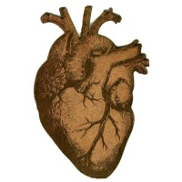 Anatomical Heart - MDF Wood Shape