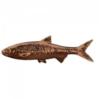 Dace MDF Fish Wood Shape