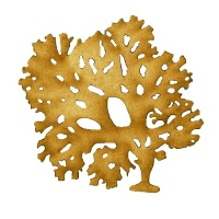 Beautiful Fan Weed - MDF Seaweed Wood Shape Style 8