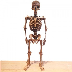 Standing Skeleton - MDF/Birch Ply Wood Kit
