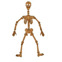 Articulated Skeleton - MDF Wood Kit