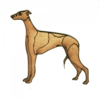 Greyhound - MDF Wood Dog Shape
