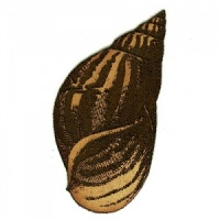 Striped Seashell - MDF Wood Shape